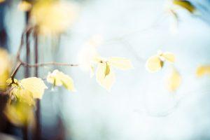 leaves-768782_640
