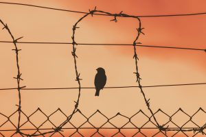 bird-on-a-wire-5243730_1920