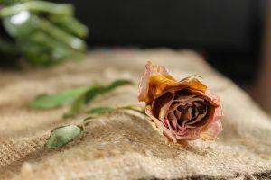 flower-1228762_1920
